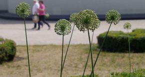 Blumen im Elisengarten Aachen