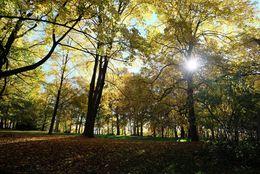 Lousberg Aachen im Herbst